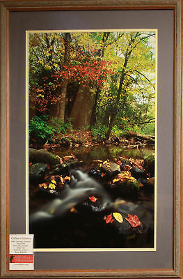 Fall Stream, Wall Art, Limited Edition Travel Photography, Signed and Framed
