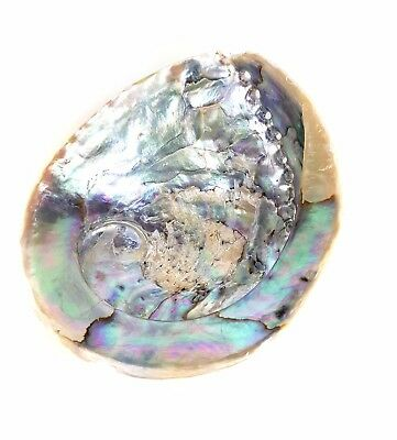 Superb OLD LARGE OCEAN SEASHELL MOTHER OF PEARL