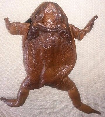 toad coin purse vintage real toad