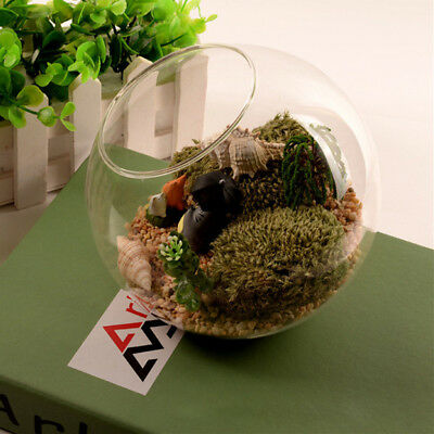 New Globe Ball Glass Hanging Plant Terrarium Flower Vase Pot Wall Wedding Decor