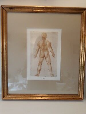 Antique Victorian Old Anatomical Art print drawing of Naked Man 'Homo Recto'