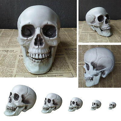 Various Size Human Artificial Skull Head Decor Skeleton Bars Home Ornament New