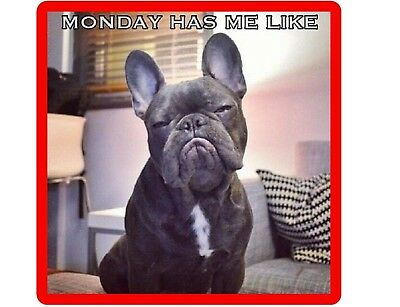 Funny French Bull Dog Monday Refrigerator / Tool Box  Magnet Gift Card Insert