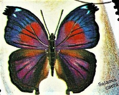 Lot of 20 Lilac Beauty Butterfly Salamis cacta Male Folded/Papered FAST FROM USA