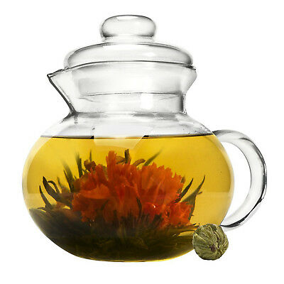Primula Blossom 40 Oz. Clear Glass Teapot Infuser and Lid with Flowering Teas