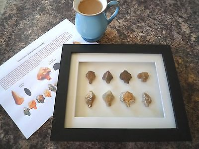Paleolithic Arrowheads in 3D Picture Frame, Authentic Artifacts 70,000BC (Y005)