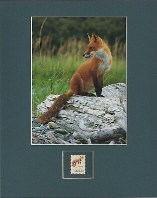 Red Fox - Frameable Postage Stamp Art - 0493
