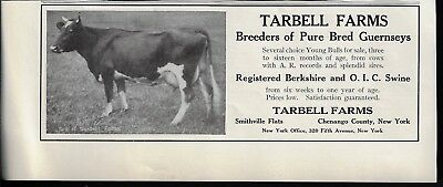 Antique Tarbell Farms Breeders Pure Bred Guernseys Photo 1915 Print Ad