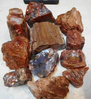 Arizona Rainbow Petrified Wood-10+ Lbs-Collect or for Your Lapidary Shop-11 PC