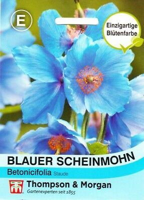 himmelblau 25 samen tibet scheinmohn meconopsis betonicifolia blauer mohn eur 1 99. Black Bedroom Furniture Sets. Home Design Ideas