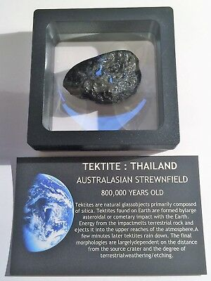 """RARE"" 16.9 Gram TEKTITE Museum Quality with stand and label"
