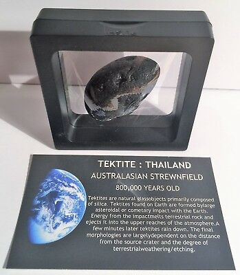 """RARE"" 29.3 Gram TEKTITE Museum Quality with stand and label"