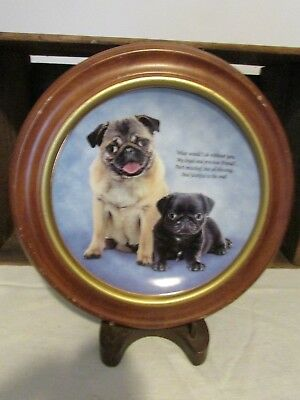 Danbury Mint Limited Edition Devoted Pugs Plate Loyal and Precious A653 Framed