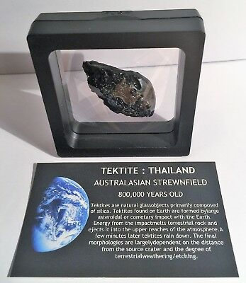 """RARE"" 13.4 Gram TEKTITE Museum Quality with stand and label"