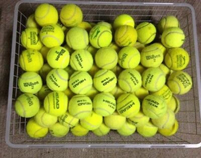 Tennis Balls for Dogs & Park Games - Bit too old for tennis court