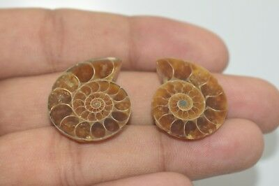 2 Piece Pair Natural Ammonites Fossil Cabochon 24x19 MM 35 Cts Free Shipping