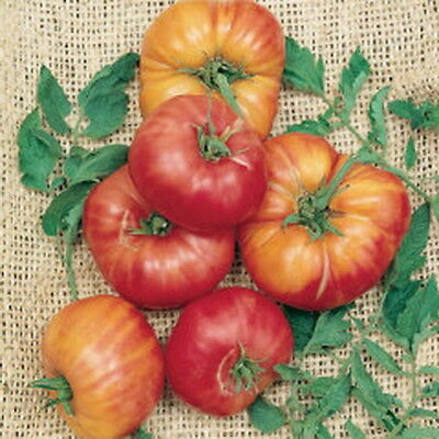 TOMATO OLD GERMAN (30 SEEDS) The fruits are huge and the flesh very sweet!!