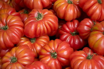 TOMATO COSTOLUTO GENOVESE (15 SEEDS) Beefsteak tomato with a meaty texture!