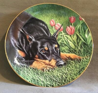 Lost in Thought Doberman Dog Limited Edition Plate Danbury Mint By Jeremy Paul