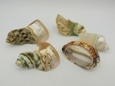 5 Antique Victorian Shell Napkin Rings Mother of Pearl Signed 1 Carved 1900's