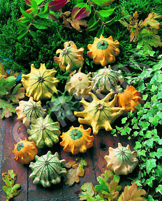 Gourd Crown Of Thorns Mix (15 Seeds)