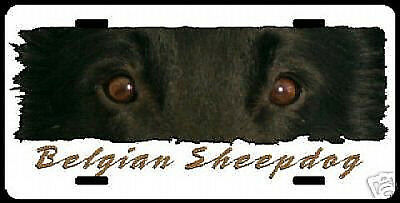 Belgian Sheepdog     The Eyes Have It      License Plate