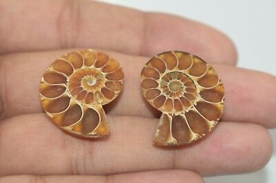 2 Piece Pair Natural Ammonites Fossil Cabochon 26x20 MM 41 Cts Free Shipping