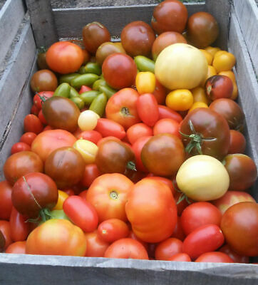 Tomato seeds rare heirloom colorful varieties 20+ pcs