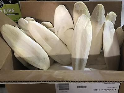 """Cuttlebone unflavored bulk 1 lb. 6"""" size pieces Bulk purchase Repacked"""