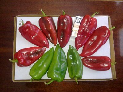 Amphora - Sweet Pepper - Serbian Variety (300 Seeds)