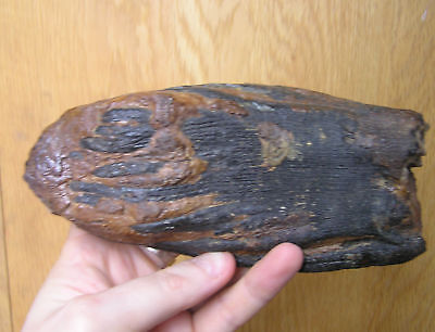 Woolly Mammoth Tooth  - Partial Tooth But Gorgeous  - North Sea - FIRST OFFERED