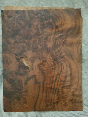 Walnut Burl Raw Wood Veneer Sheet 8.5 x 11.5 inches - No Backer