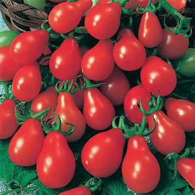 Red Cherry Pear Tomato (150 Seeds) Heirloom!