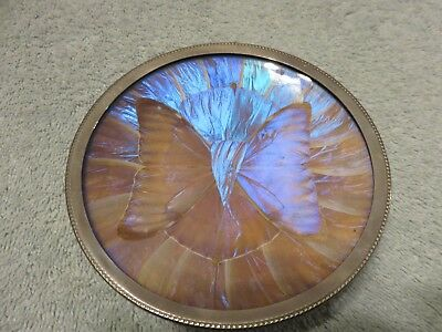 Butterfly Wing Art Saucer: steel base, plastic covering, 4 3/4 inch diameter