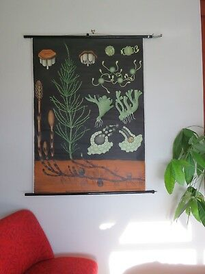 Vintage Pull Down School Chart Horsetail Puzzle Snake Grass Botanical Jung Koch