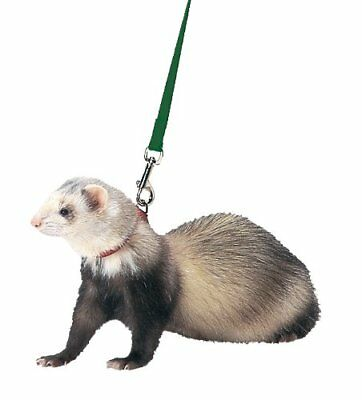 Marshall Ferret Harness and Lead Hunter Green