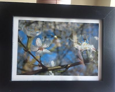 Framed Photo Of Cherry Blossoms
