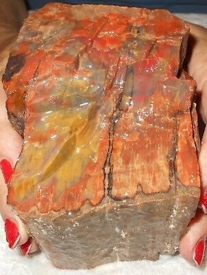 Arizona Rainbow Petrified Wood Rough  Gift/ Garden Decor/ Lapidary 3 Lbs F168
