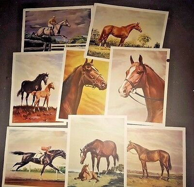 "Vintage Sam Savitt portfolio Thoroughbred Horses 6 17"" prints & portfolio cover"