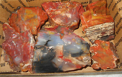 Arizona Rainbow Petrified Wood Rough Slab/cab/collect 2 Lbs F185