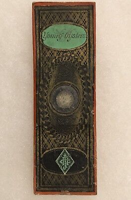 Antique Victorian YOUNG OYSTER Microscope Slide Paper Wrapped