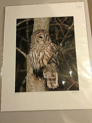 Barred Owl 8 x 10 inch Photo by Egressy Photography