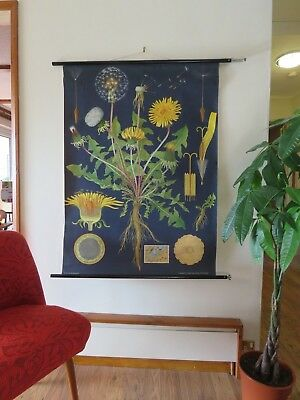 Vintage Pull Down School Chart Dandelion Jung Koch Quentell Vintage Botanical
