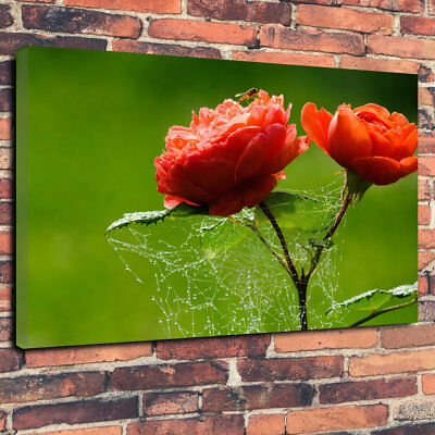 "Red Flowers With Web Printed Box Canvas Picture A1.30""x20"" 30mm Deep Home Decor"