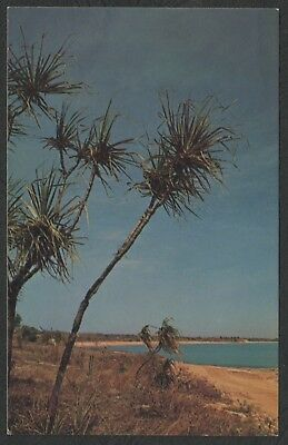 e1371)       VINTAGE POSTCARD OF VESTEY BEACH, DARWIN IN THE  NORTHERN TERRITORY