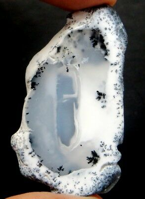 53Cts. Natural Opal Amazing Dendrite Agate Plate Slice Gemstone Rough 2241