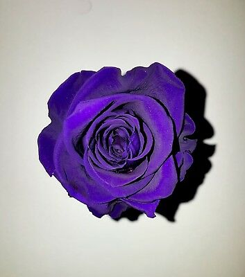 preserved rose purple perfect gift lasts long made from fresh rose $15