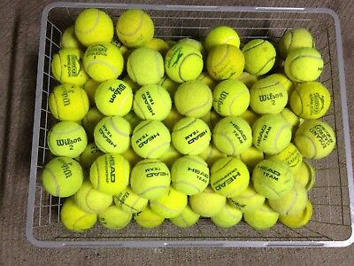 10 Tennis Balls for Dogs & Park Games - Bit too old for tennis court