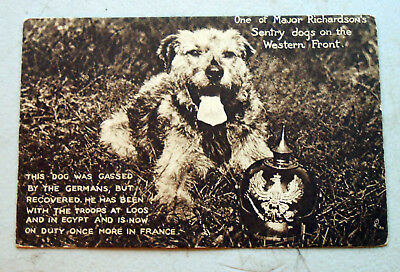 One of Major Richardson's Sentry Dogs On The Western Front Postcard In VG Cond.