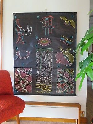 Vintage Dr Auzoux Sougy Pull Down School Wall Chart Glands Adrenal Thyroid Cells